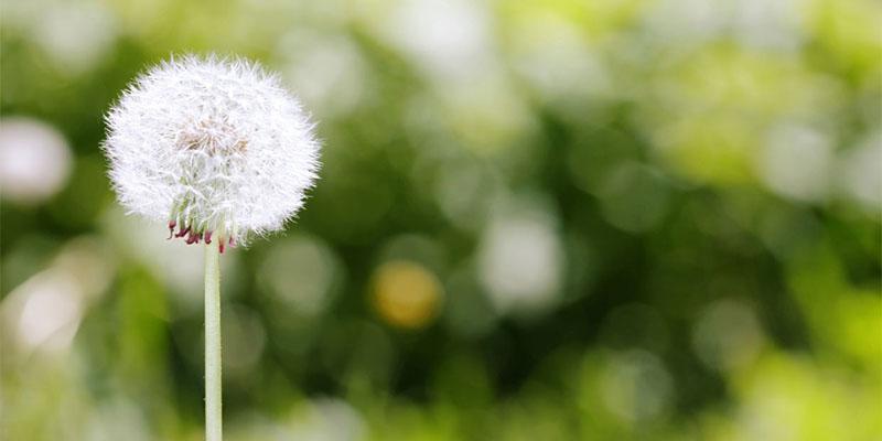 10 mythoi epoxikes allergies